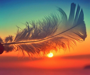 beach, feather, and nature image
