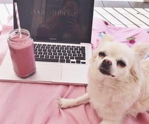 dog, pink, and luxury image