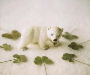 Polar Bear and polaroid image