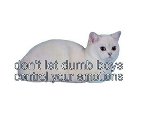 boys, cat, and dont image