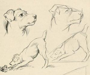 dog, draw, and animals image