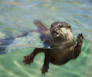 adorable, animal, and beach image