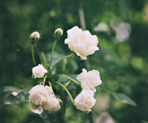 flower, indie, and nature image