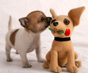 cute puppy, love, and toy image