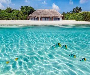 Maldives and summer image