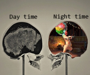 brain, night, and madagaskar image
