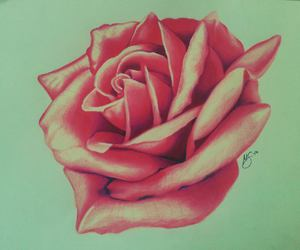 drawing, pink, and rose image