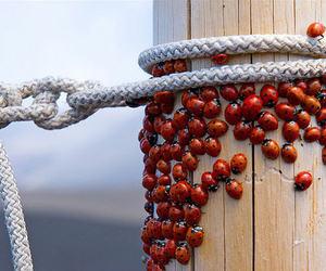 ladybug, red, and ladybird image