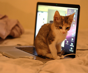 cat, laptop, and sweet image
