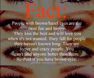 fact, eyes, and brown image