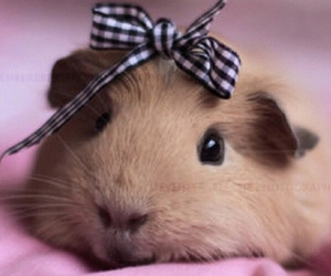 cute, animal, and bow image