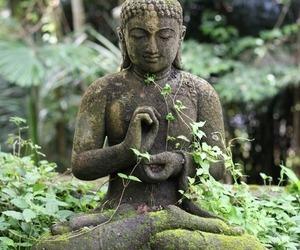Buddha, nature, and buda image