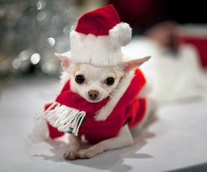 cute, christmas, and funny image