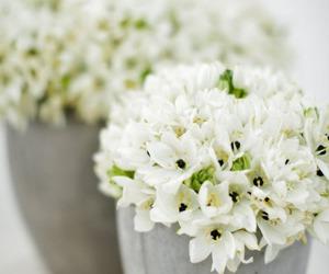 flowers and jasmine image