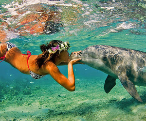 dolphin, kiss, and summer image