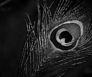 black and white, nice, and feather image