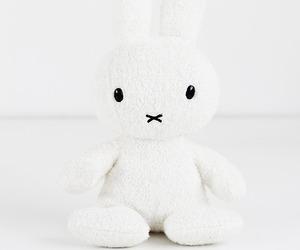 white and rabbit image