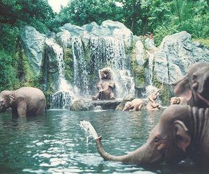 Animais, elefantes, and bichinhos image