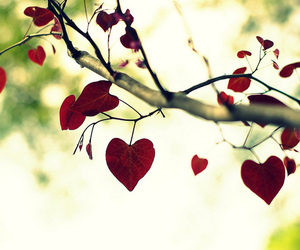 hearts, red, and tree image
