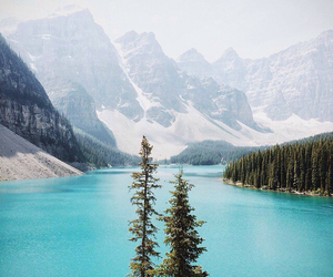 nature, canada, and forest image