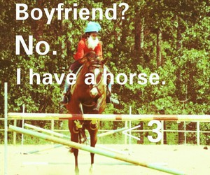 amour, free, and horse image