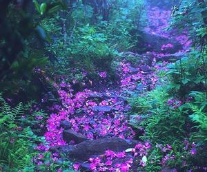 flowers, wild, and forest image