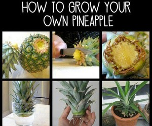 pineapple and diy image