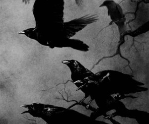 crow, black, and black and white image