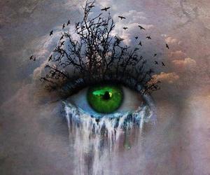 eye, eyes, and bird image
