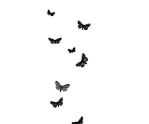 overlay, butterfly, and transparent image