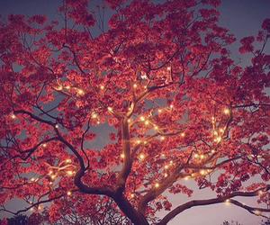 tree, light, and pink image