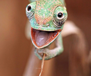 animal, chameleon, and funny image