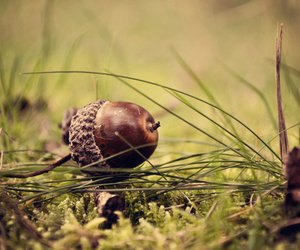 nature, acorn, and forest image