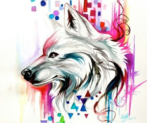 wolf, colors, and animal image