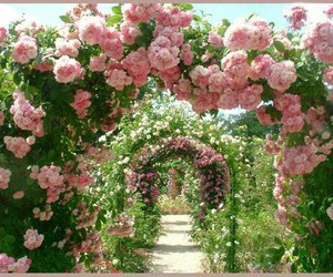 art, nature, and pink image