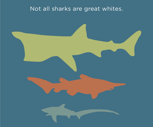nature, sharks, and ocean image