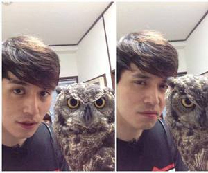 actor, owl, and roommate image