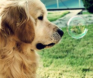 dog, cute, and bubbles image