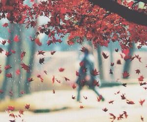 autumn, rain, and leaf fall image