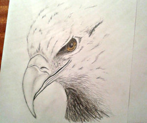 drawing, eagle, and golden image