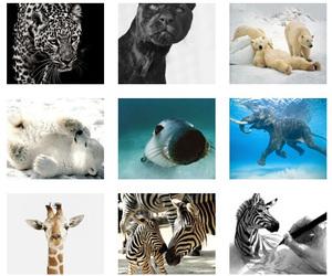 animals and wild image