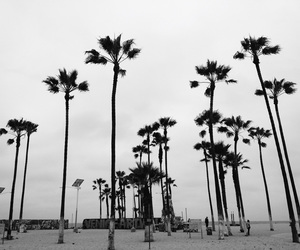 black and white, palm trees, and palms image