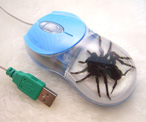 spider and mouse image
