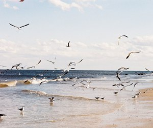 bird, beach, and Flying image