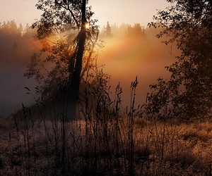 fog, meadow, and alemdagqualityonlyclub image