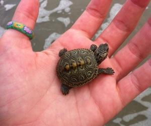 turtle, animal, and hand image