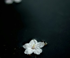 flower, indie, and photography image