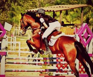 horse riding and jumping image