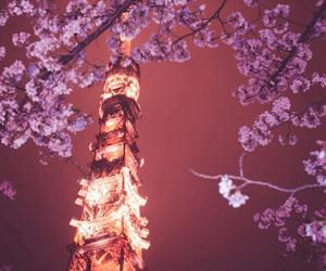 light, paris, and flowers image