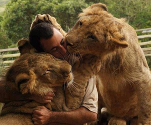 animals, love, and lions image